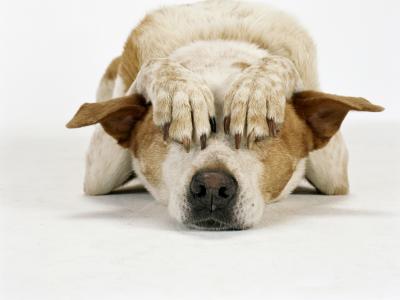 ansia da separazione del cane