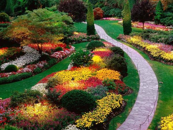 Come si dispongono le piante in giardino?