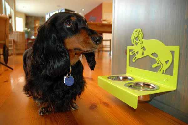 Spesa per accessori per animali