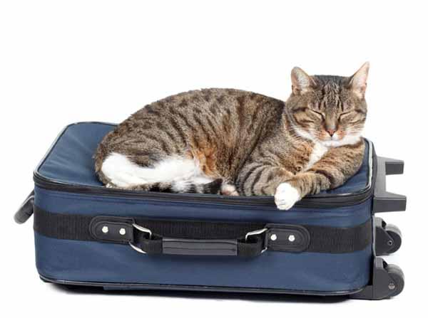 organizzarsi per viaggiare con gli animali