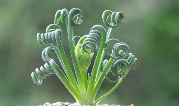 Come curare le piante grasse?