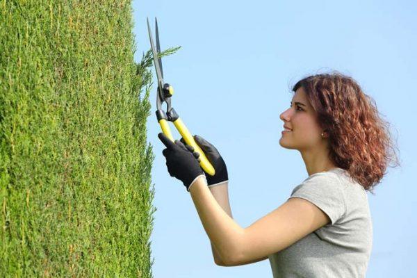 tecniche di potatura delle piante