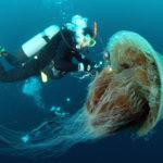 Come difendersi dalle meduse?
