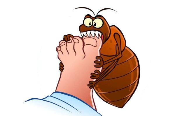 Rimedi naturali contro le punture di insetti