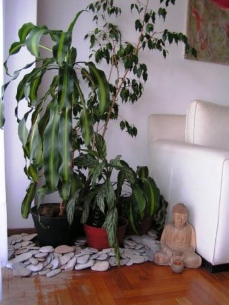 Piante da arredamento interno idea creativa della casa e - Piante verdi interno ...