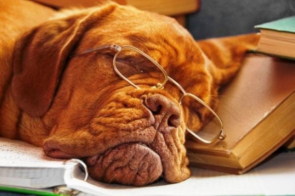 addestrare il cane a non mordere le cose in casa