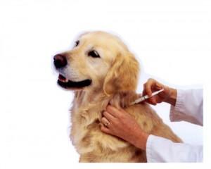 vaccinazioni obbligatorie per cani